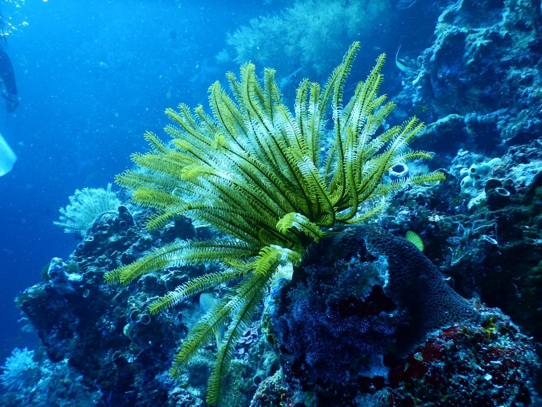 coral color verde - biodiversidad marina